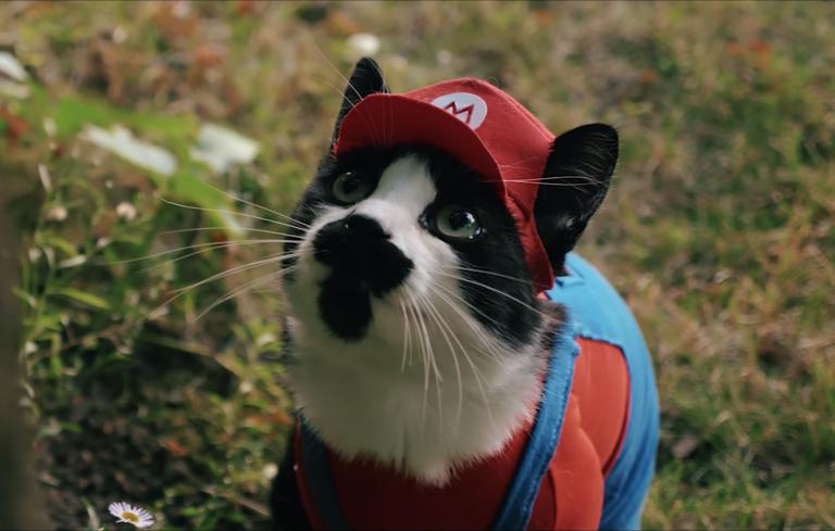 Super Mario Cat Bros. должна стать настоящей игрой!