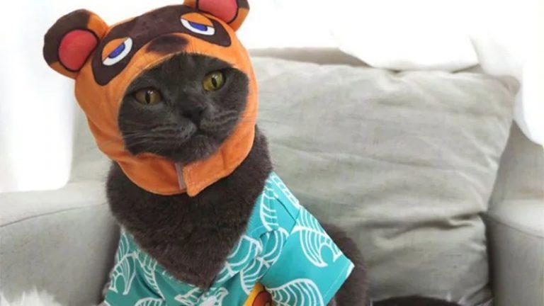 Появляются нелицензионные костюмы Тома Нука из Animal Crossing: New Horizons для кошек!